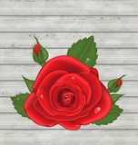 Close-up red rose for Valentine Day on wooden background
