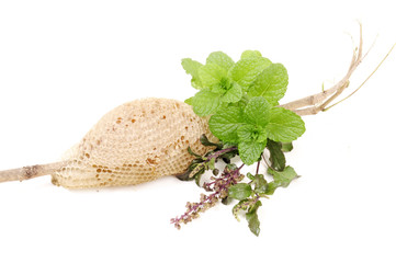basil (tulsi), mint and honey in group on isolated white