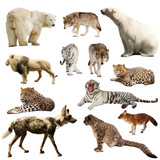 Set of predatory mammals over white