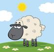 Cute Black Head Sheep On A Meadow