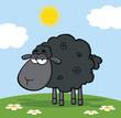 Cute Black Sheep On A Meadow