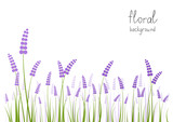 Fototapety Lavender flowers on white background