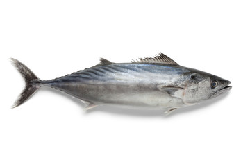 Singlre fresh bonito fish