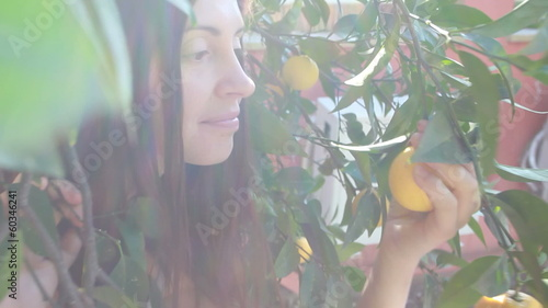 woman picking up a fresh orange from tree