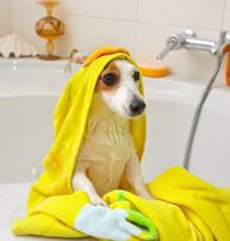 Crabot prenant un bain dans une baignoire