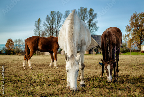 Horses feeding outdoors