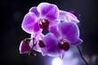 Fototapeta Kwiat - Kwiat - Kwiat