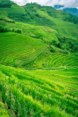 rizière en terrasse chinoise