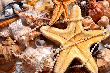 морская звезда и жемчуг