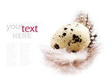 Single Quail egg with a white feather isolated on white backgrou