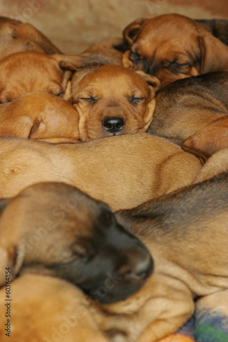 cute puppies sleeping