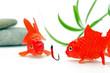 Angelhaken und Goldfische