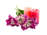 fringed tulip and burning candles