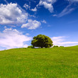 California meadow hills with oak tree