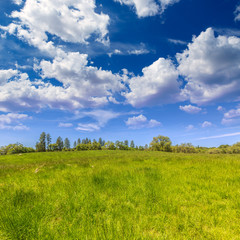 California meadow ranch in a blue sky spring day
