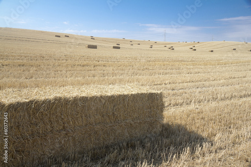 field of bales of hay