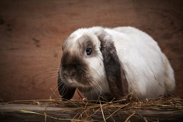 portrait of rabbit