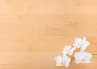 branch white orchid on bamboo wooden  background