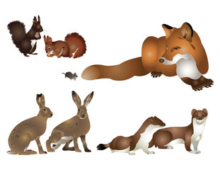 Colection of wild mammals