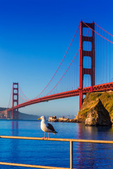San Francisco Golden Gate Bridge seagull California