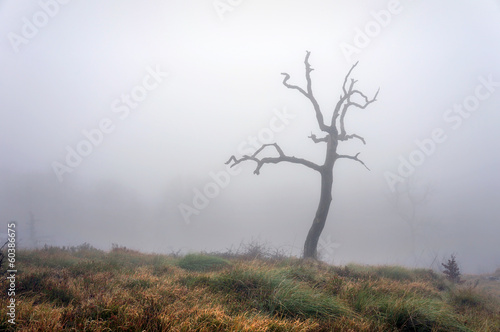 lonely and dry tree