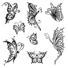 Papillons, insectes, été