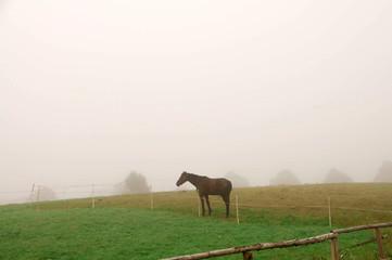 A horse grazing  in the fog.