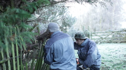 Professional gardeners with hand saw pruning trees in winter.