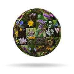 Planet flowers