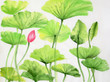 Watercolor painting of lotus leaves and flower