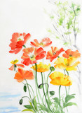 Watercolor painting of red and yellow poppies