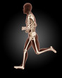 jogging male medical skeleton