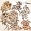 Collection of vector hand drawn detailed roses for design