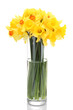 beautiful yellow daffodils in transparent vase isolated on