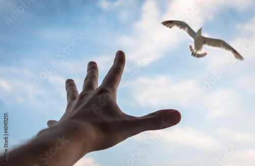 Hand reaching to bird in the sky. Selective focus on a hand.