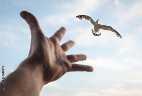 Hand reaching to bird in the sky. Selective focus on a bird.