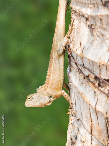 Closeup lizard on tree