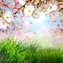 Frohe Ostern: Frühlingshafter Hintergrund mit Kirschblüten