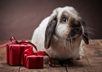 rabbit and gift boxes