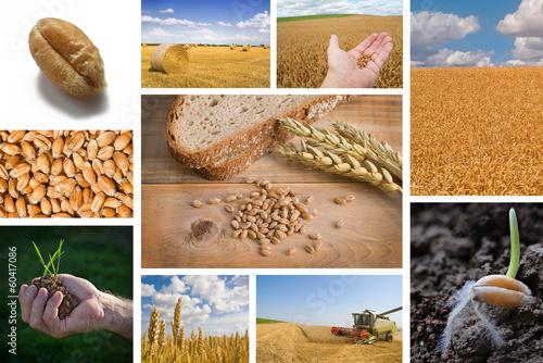 canvas print picture Weizen und Brot