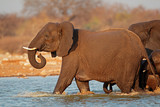 Elephant in water, Etosha National Park