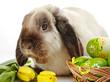 Obrazy na płótnie, fototapety, zdjęcia, fotoobrazy drukowane : Easter rabbit