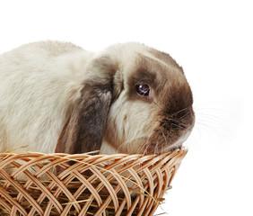 rabbit in a basket