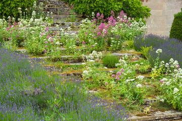 Stone steps overgrown with flowers