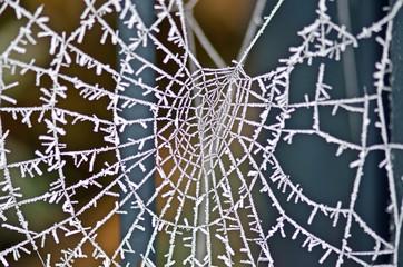 Spinnennetz bei Frost