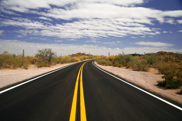 road in USA in the Organ Pipe National Monument, Arizona