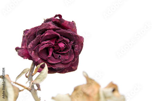 dried rose flower