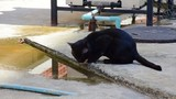 Black cat is drinking water on the ground