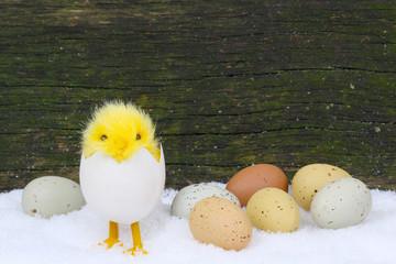 Küken und Ostereier im Schnee