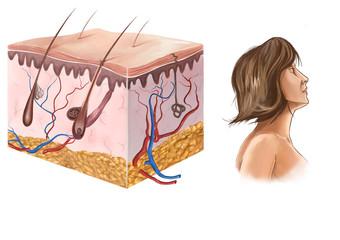 deri anatomisi